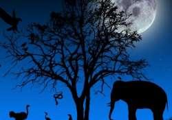 Országszerte lesz állatkertek éjszakája